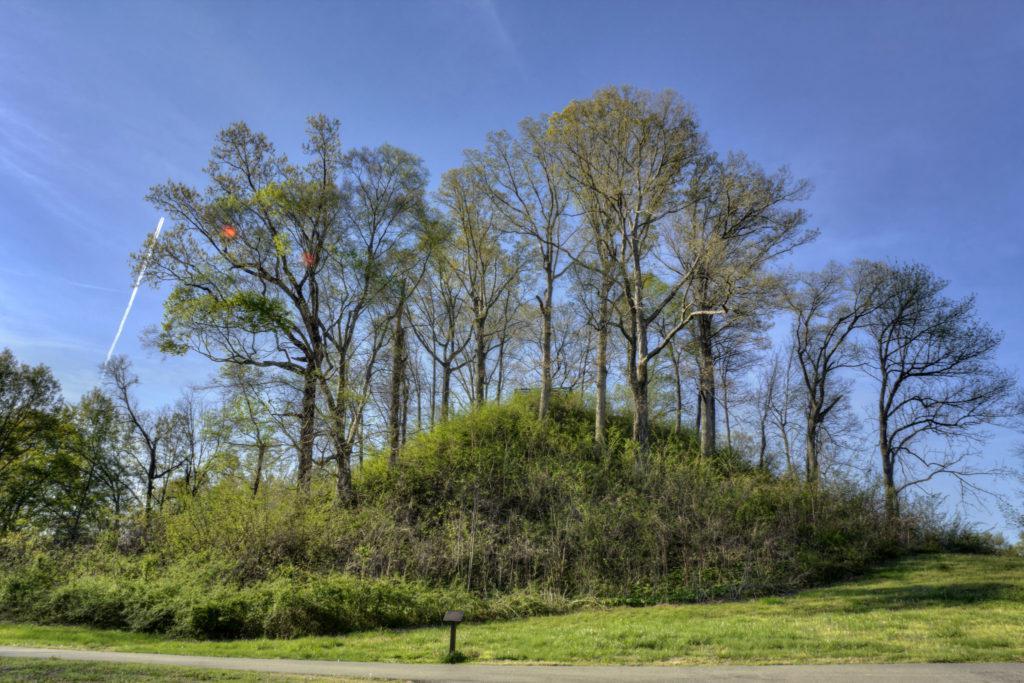 绿色的树在山丘上,在蓝天前