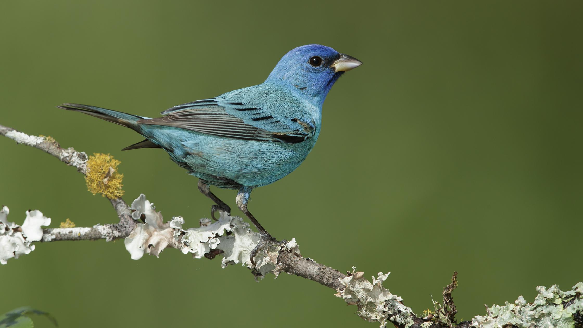 蓝色的鸟栖息在树枝上